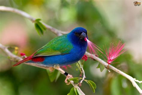 The Parrotfinch Family   Pets4Homes