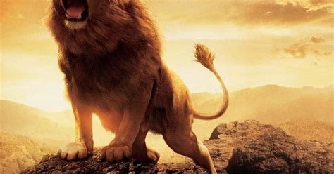Top 10 Lion Pictures for whatsapp DP - Good Morning
