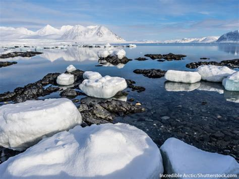 The Arctic Facts For Kids: Information, Pictures & Video