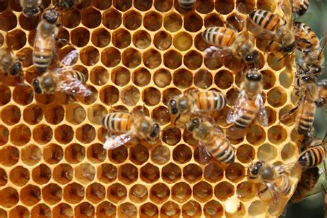 The Buzz In The Dale: Bee Eggs